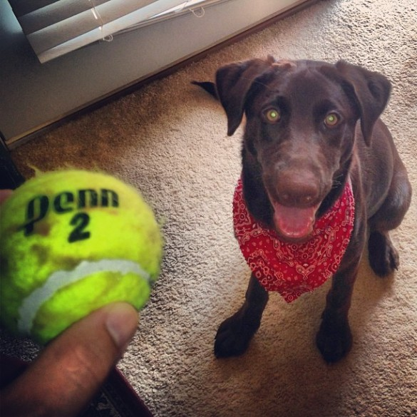 Ruby tennis ball